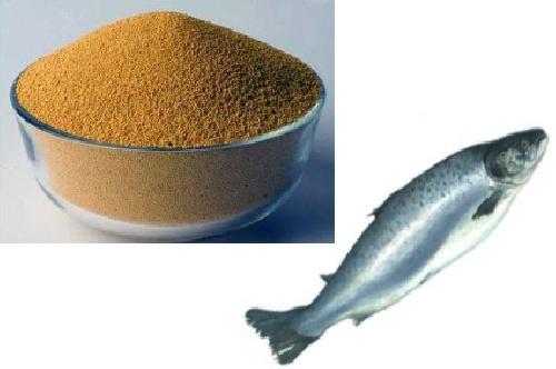 طرح توجیهی پودر ماهی 25000 تن سالیانه